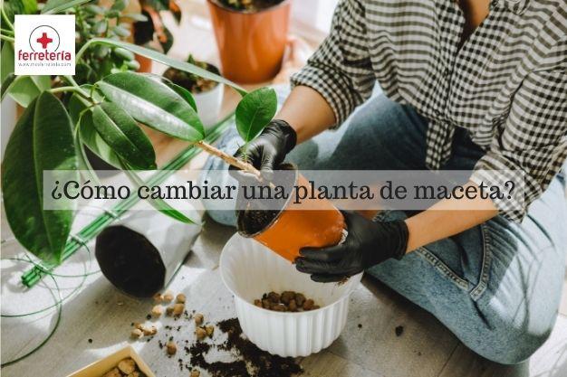 como cambiar una planta de maceta