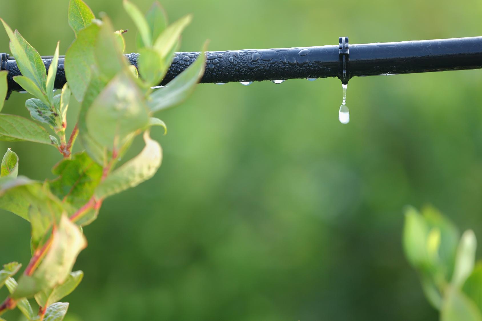 C mo instalar un sistema de riego por goteo - Tubo riego por goteo ...