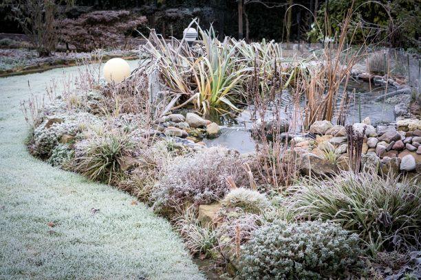 Trucos-para-proteger-plantas-del-frio