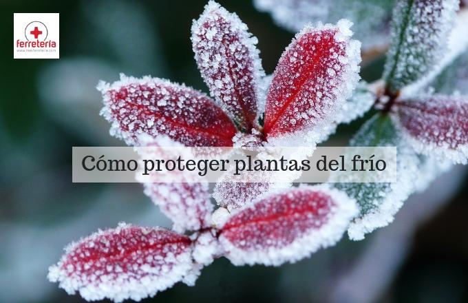 Cómo proteger plantas del frío