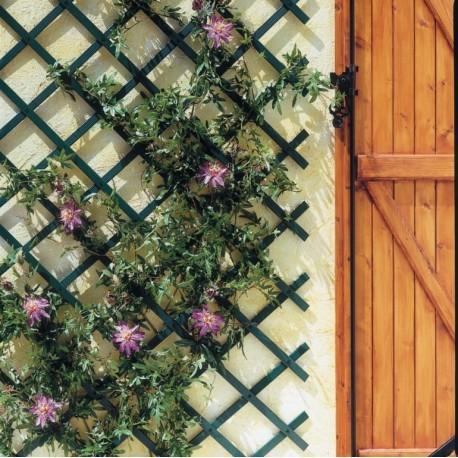 celosia-ocultación-jardin