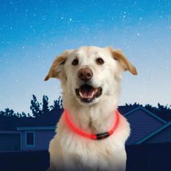 Collar Perro Luz Roja Led