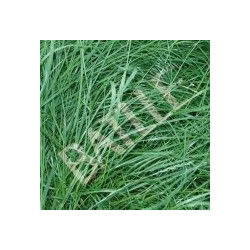 Semilla Ray-grass Ingles Diploide 5 Kg.043301k5