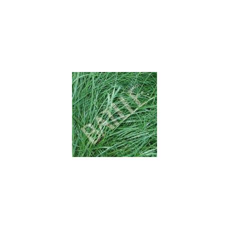 Semilla Ray-grass Ingles Diploide 5 Kg.043301k5