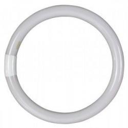 Tubo Fluorescente Circular Trifosforo 32w 6500k Garza