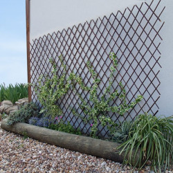 Celosia Natural Willow Trellis 2x1 Mt