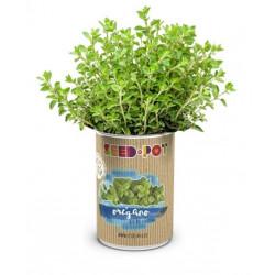 Huerto Urbano Kit Oregano Seedbox Lata Sustrato+semilla