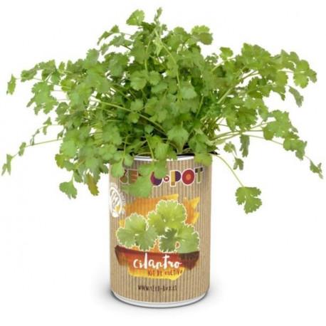 Huerto Urbano Kit Cilantro Seedbox Lata Sustrato+semilla